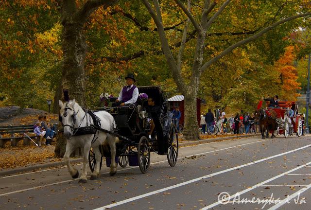 Central Park jesienią