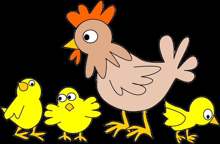 galaretka z kurczaka