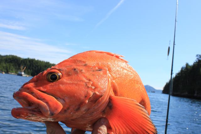 Łowienie ryb na Alasce