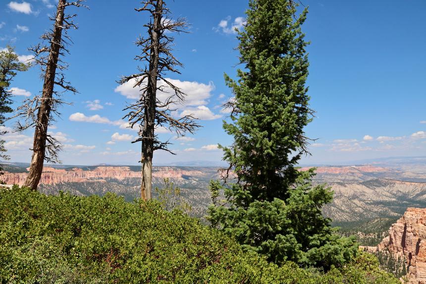 Bryce Canyon w stanie Utah